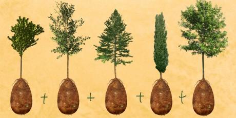 Capsula Mundi urns and coffins Trees
