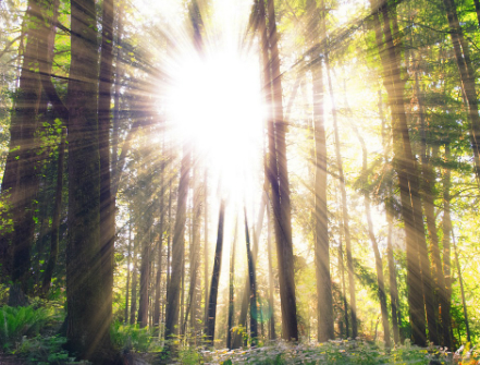 Capsula Mundi forest