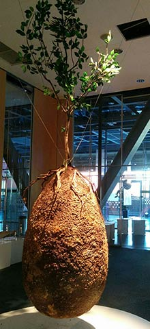 natural urn shop